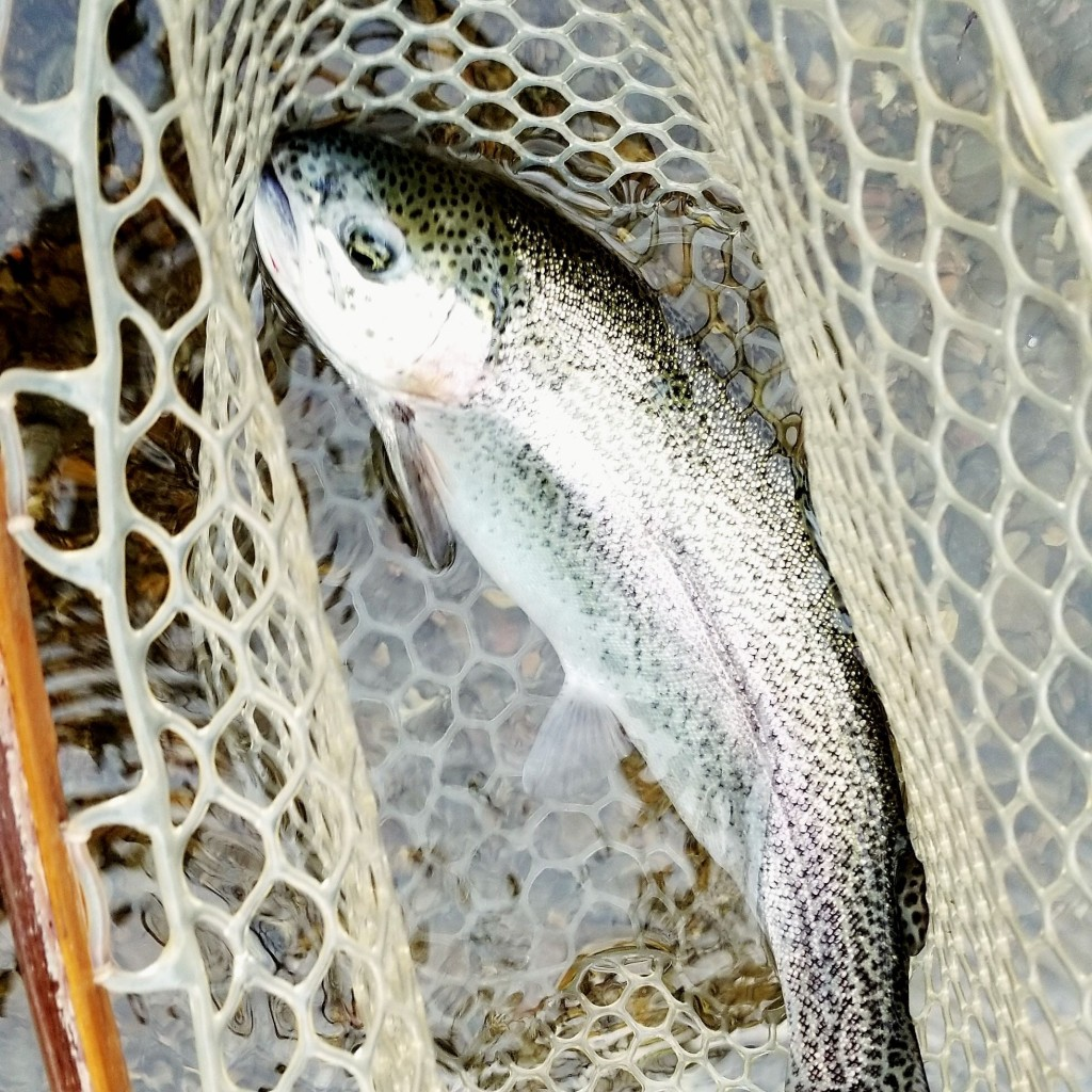 broken bow oklahoma trout guides