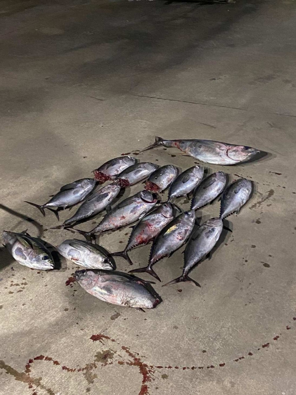 Freeport fishing charters