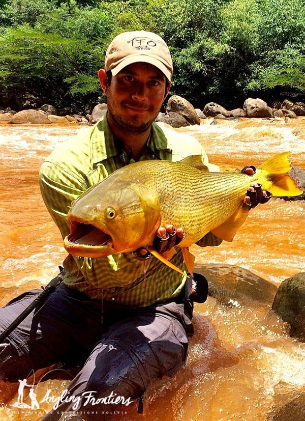 golden dorado fly fishing