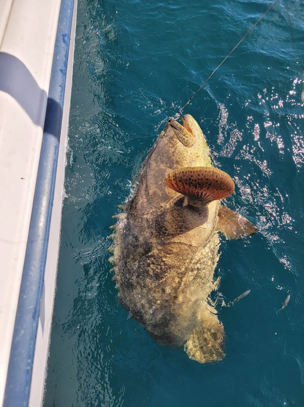 best fishing charters in Clearwater2