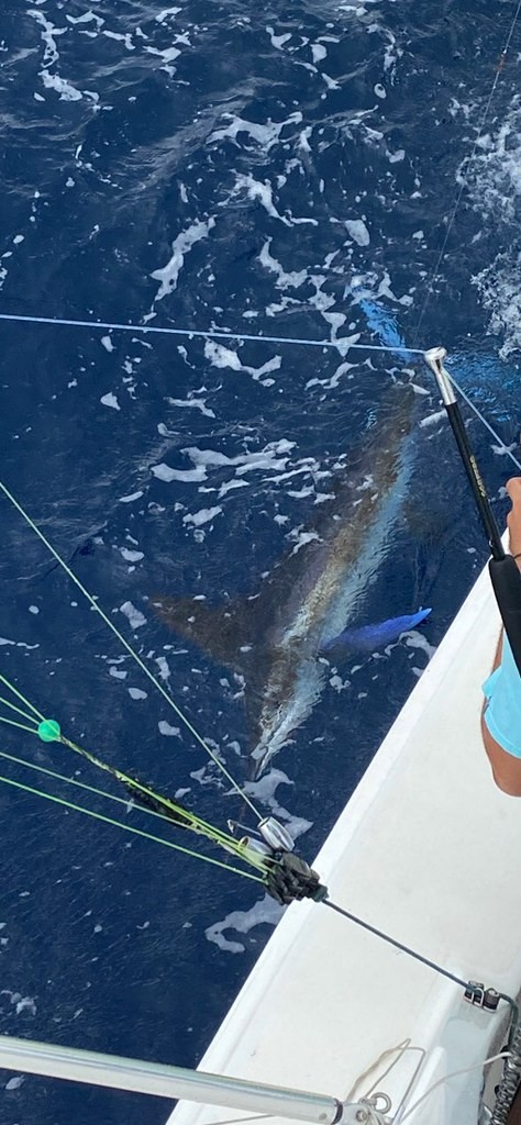 best fishing charters in san juan trip