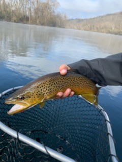 Knoxville sport fishing