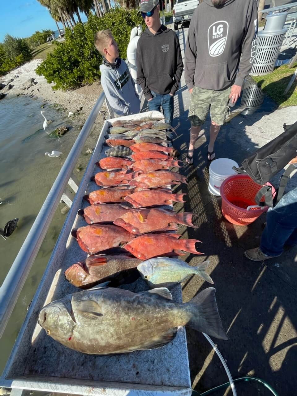 clearwater fl fishing guides