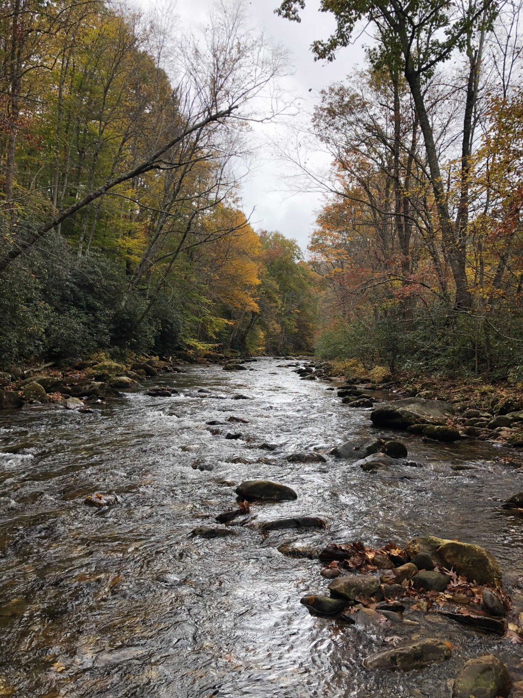 best trout fishing in nc