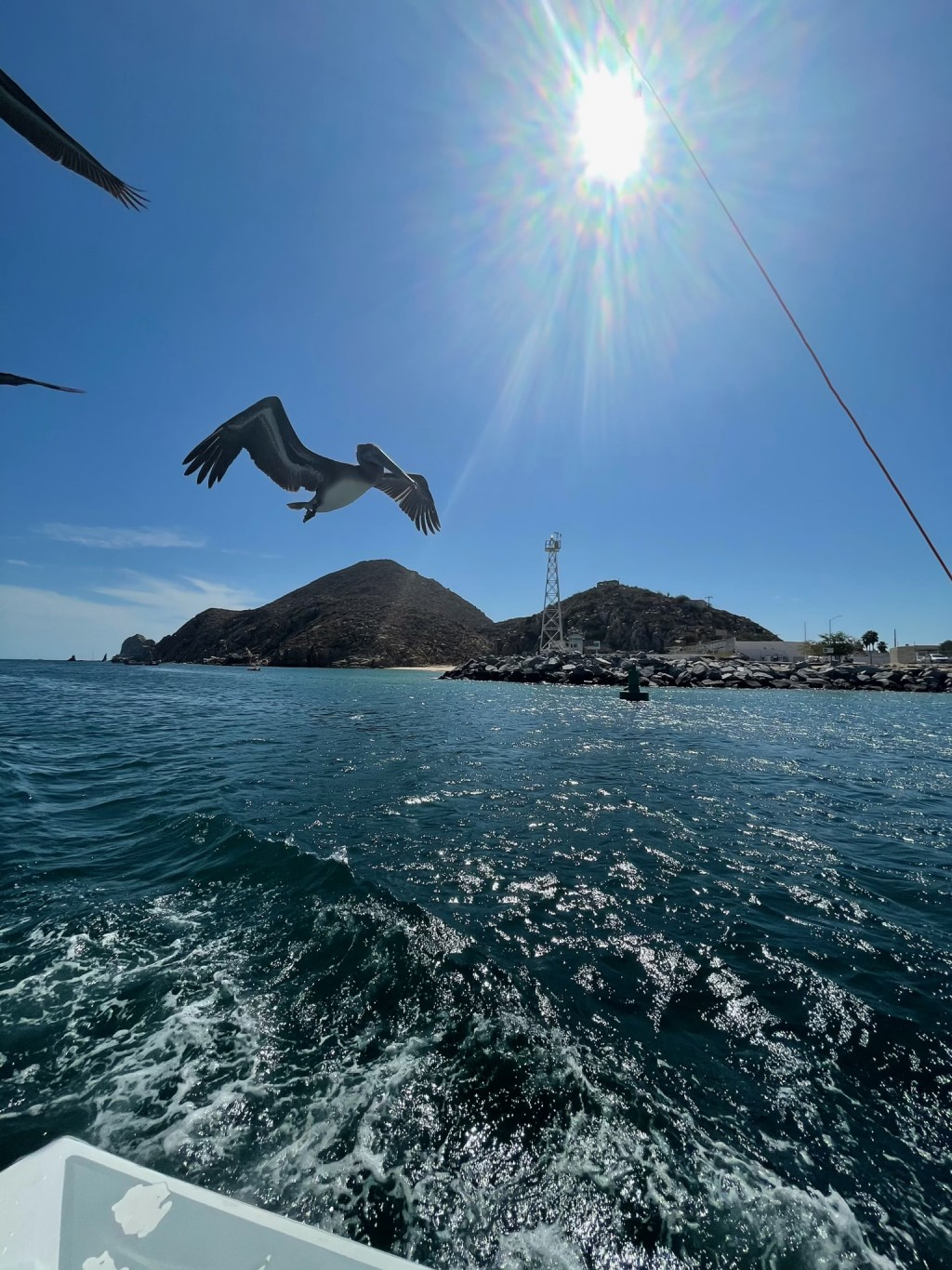 Pelican Flying by Boat Cabo
