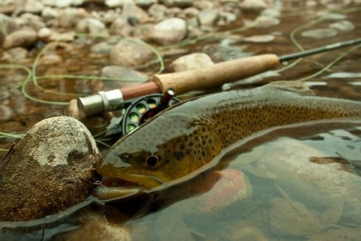 littleton colorado fishing charter