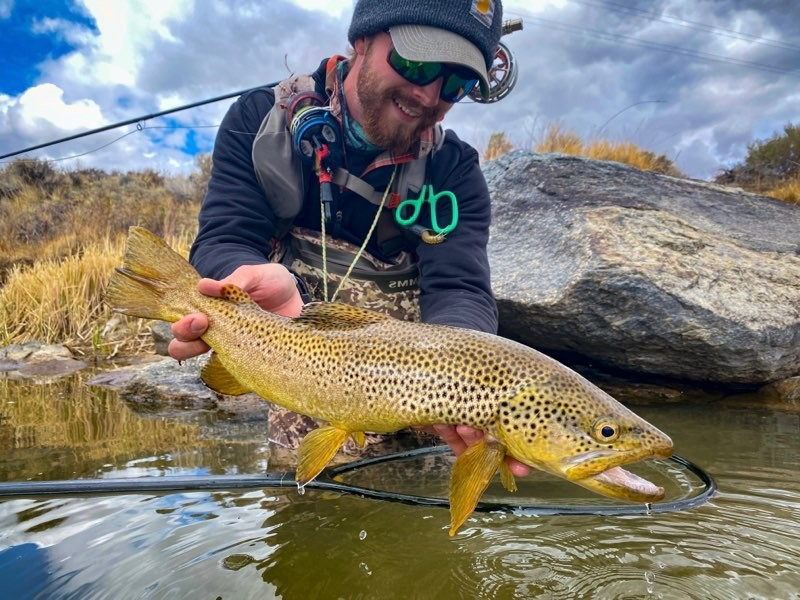wyoming brown trout fly fishing