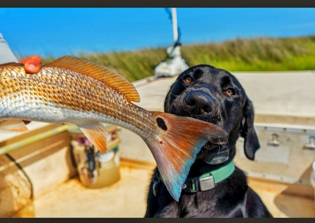 best fishing guide in morehead city3