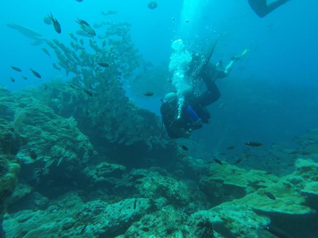 3/4 Day Spearfishing Trip   Captain Experiences