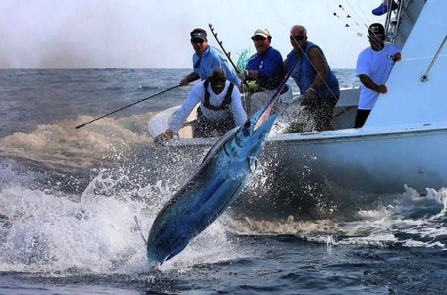 San Juan Offshore Fishing Half Day | Captain Experiences