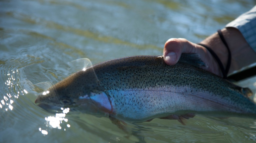Guadalupe River Trout Fishing - Drift Boat   Captain Experiences