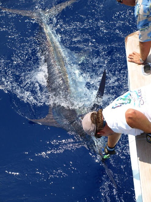 Full Day, 3/4 Day or Half-day Fishing Trip - 35' Bruno and Stillman   Captain Experiences