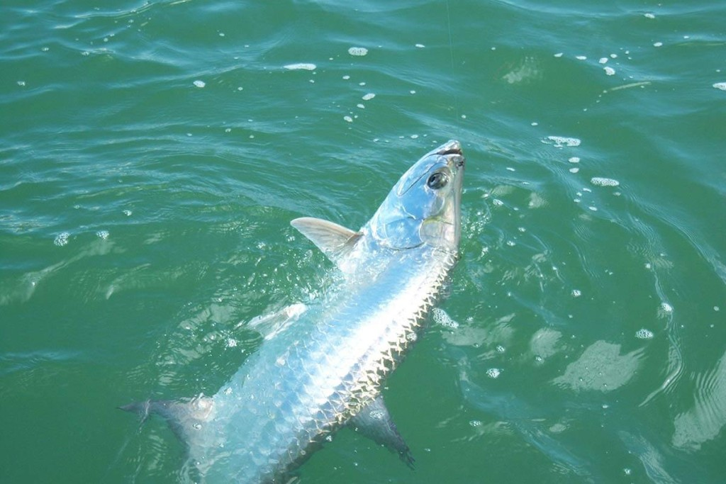 Clearwater Flats Fishing Experience - 21' Backcountry   Captain Experiences