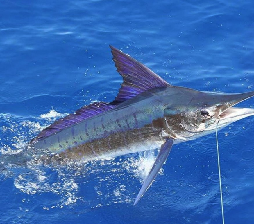 Hatteras (60') Full-Day or Half-day Trip | Captain Experiences