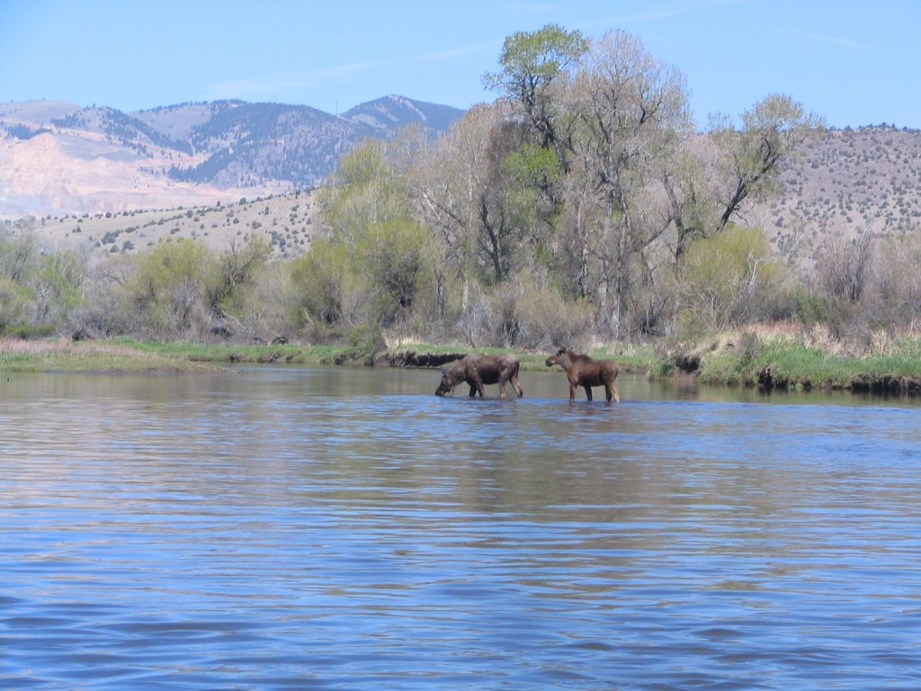 Jefferson River Full-Day or Half day Float | Captain Experiences