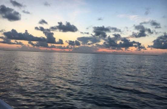 3 Hour Trip – Shrimp Trawling | Captain Experiences