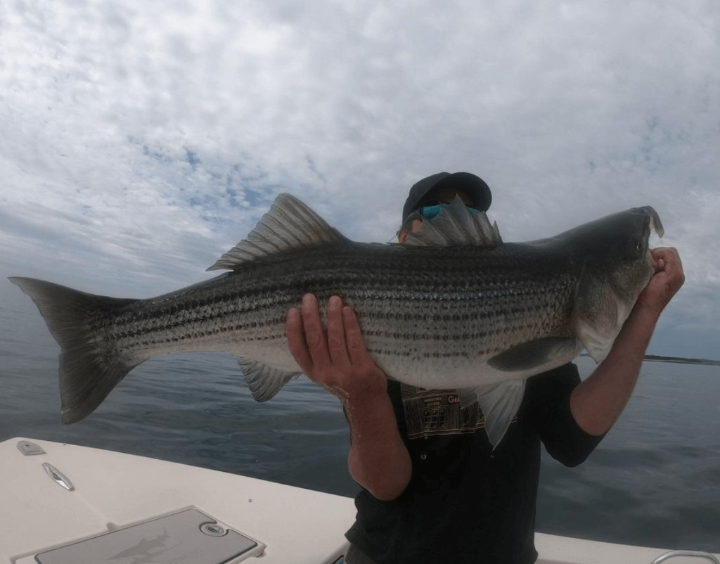 Fishing Trip: Striped Bass, Bluefish | Captain Experiences