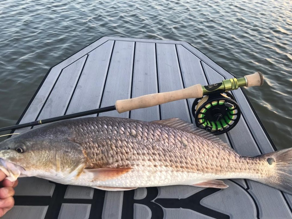 8wt Charters (Half or Full day) | Captain Experiences