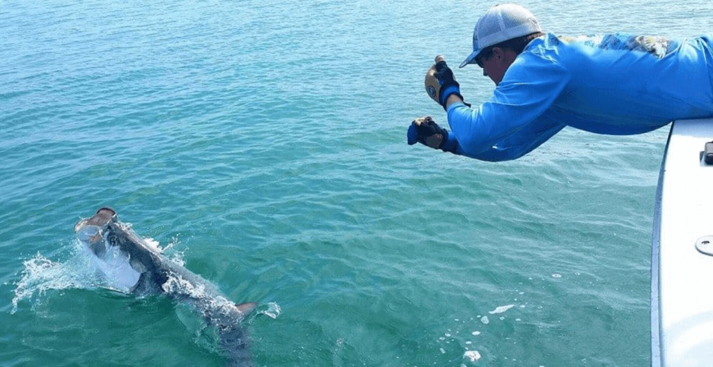 Tarpon and Permit Fishing in Key West, Florida - Full Day Trip
