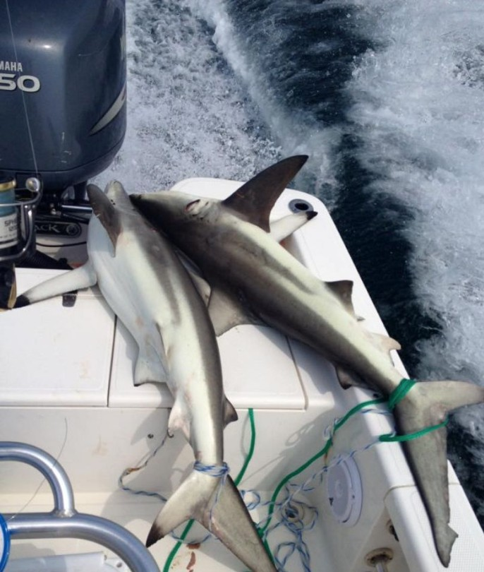 Shark Trip - 24' Blazer | Captain Experiences