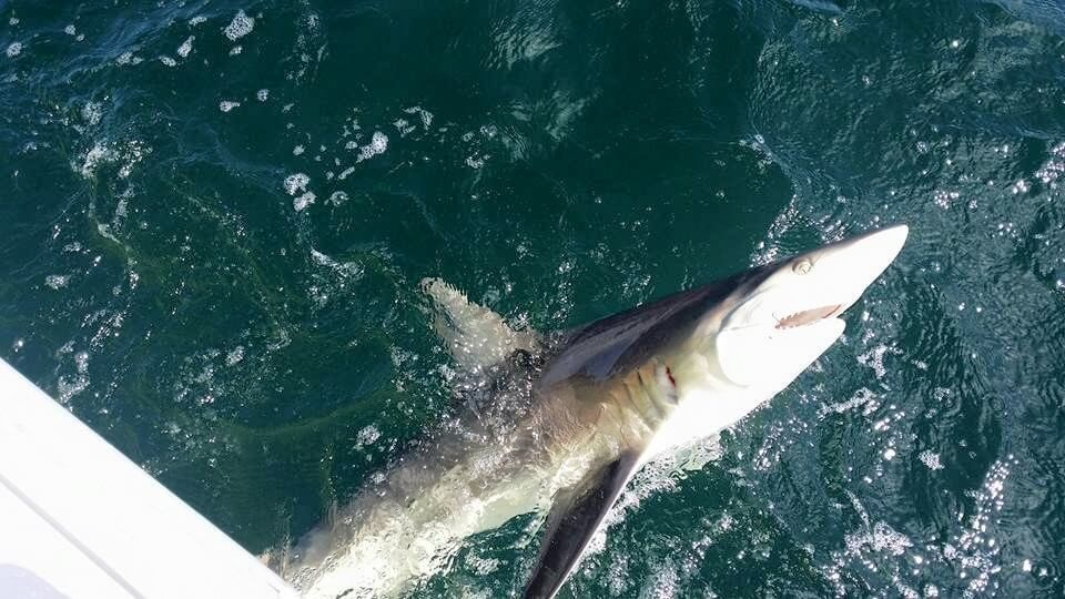 Shark Trip - 22' Cape Horn center console | Captain Experiences