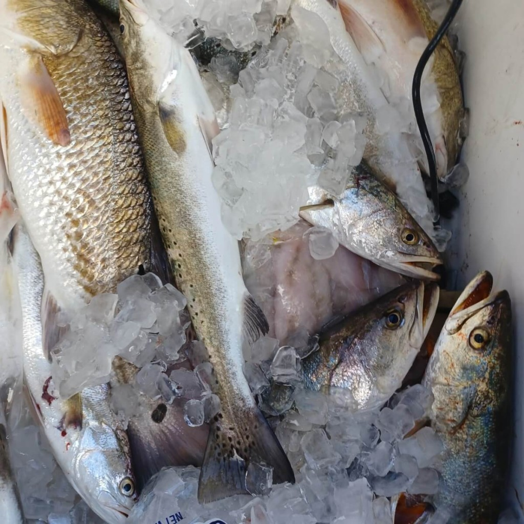 Full Day or Half-Day Inshore Fishing | Captain Experiences