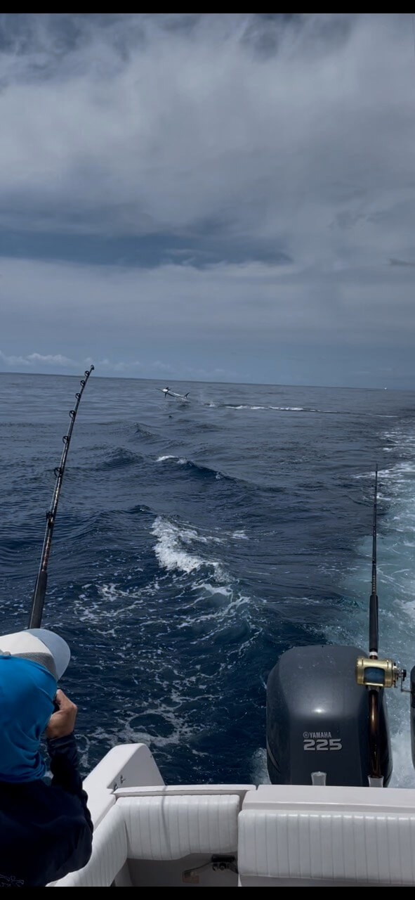 Full Day, 3/4 Day or Half-day Nearshore Fishing Trip | Captain Experiences